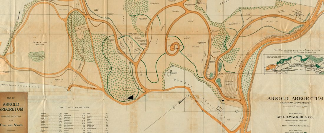 Map of Arnold Arboretum showing location of the trees and shrubs