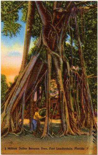 2 Million Dollar Banyan Tree, Fort Lauderdale, Florida