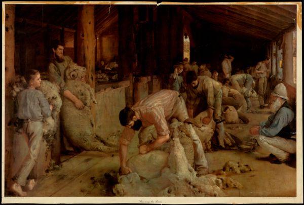 Shearing the rams.