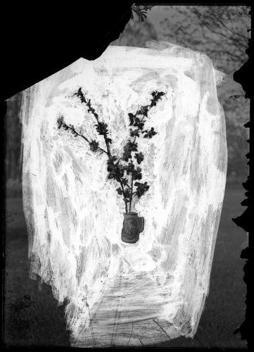 Still life, flowers, masked negative
