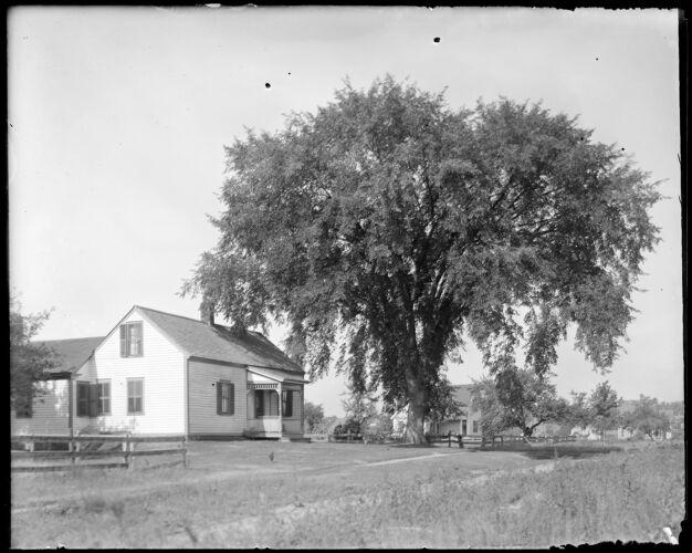 Davis house + Elm tree