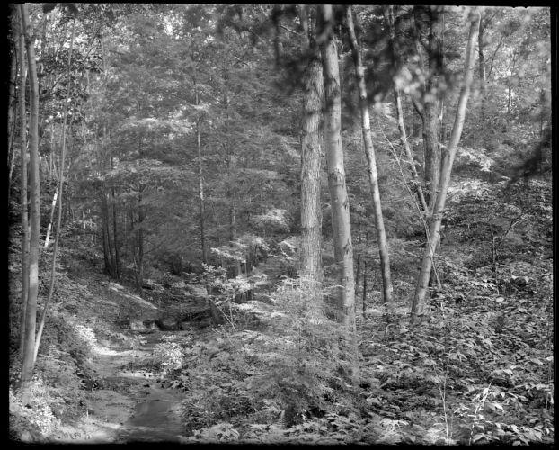 Ferns wood