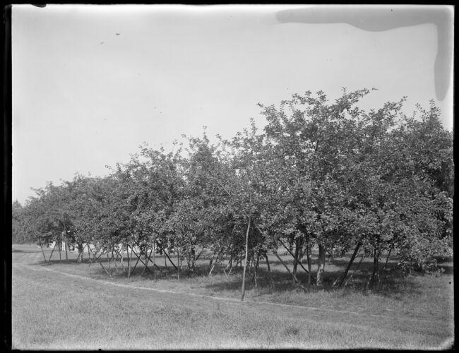 Apples, T. Watters