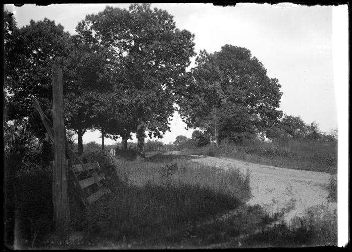 Chestnut trees, Depot Road (Emerson Street)