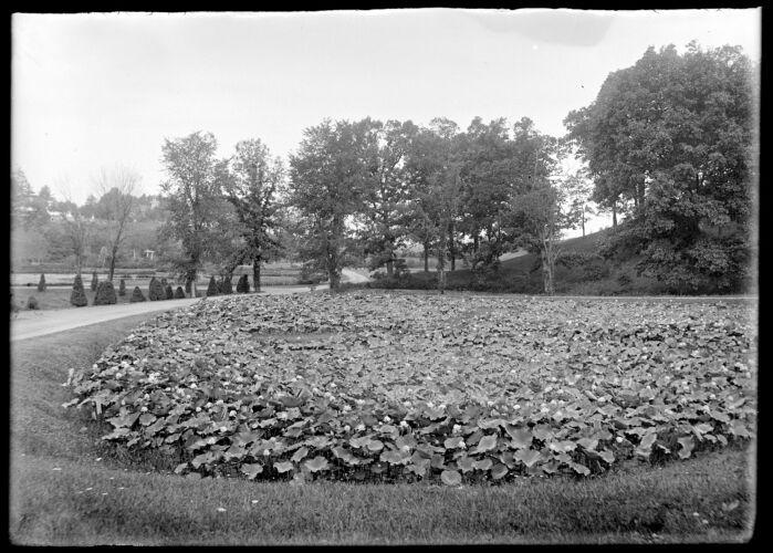 Forest Park lotus ponds