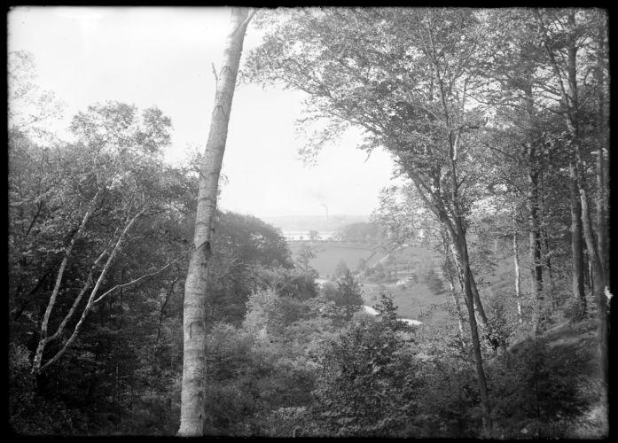 Forest Park, vista