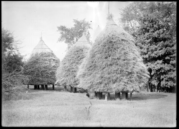Wheat stacks, H H Emerson