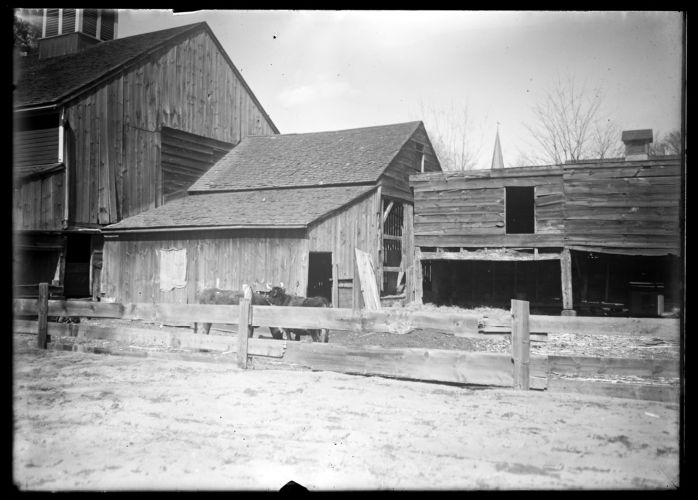 Barns, cows, J. Colton place