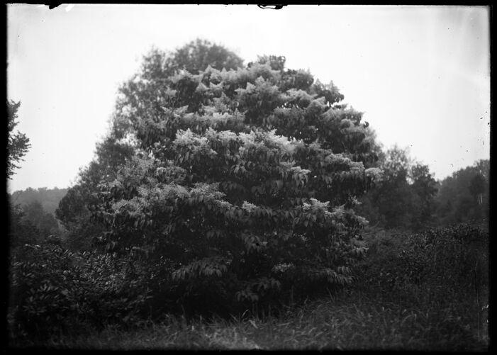 Tree near brook, Forest Park #1
