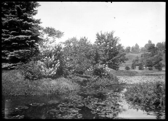 Lillies, Forest Park