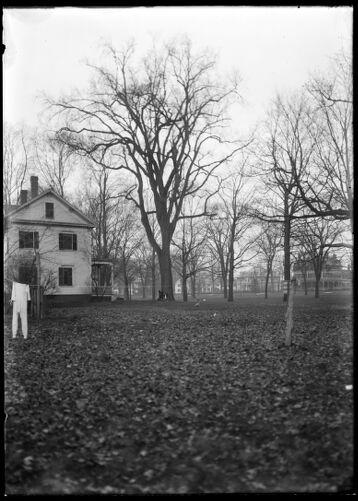 Elm, William Pease house