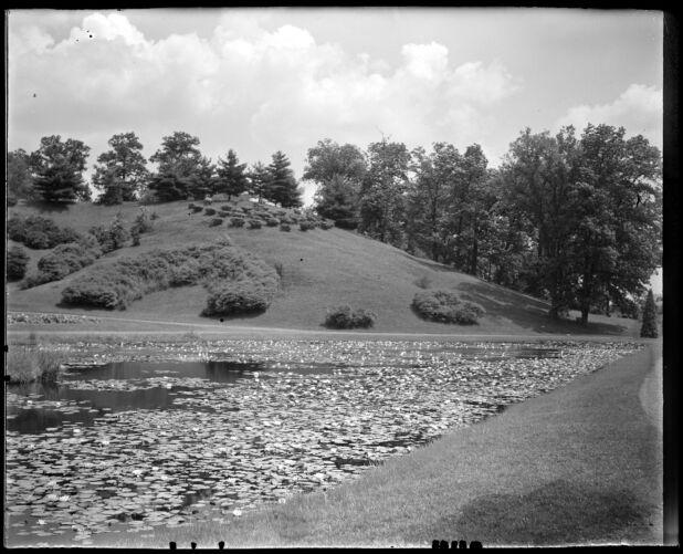 Lillies Forest Park