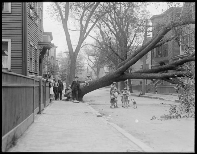 Wind & storm, Cambridge, MA