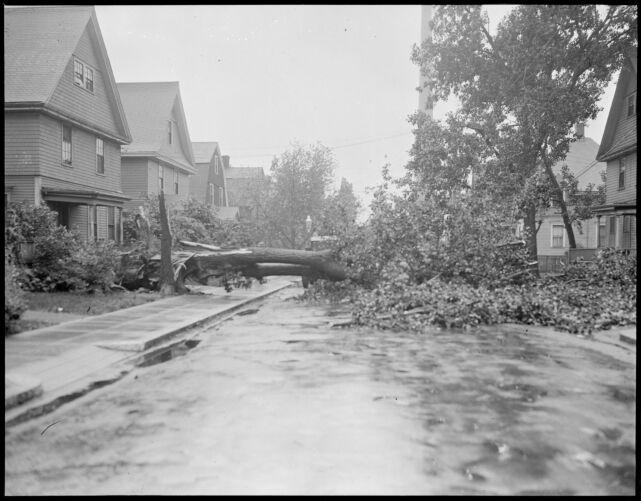 Wind blows tree down in Dorchester