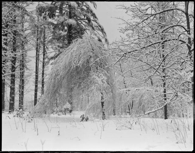 Abington, MA snowstorm