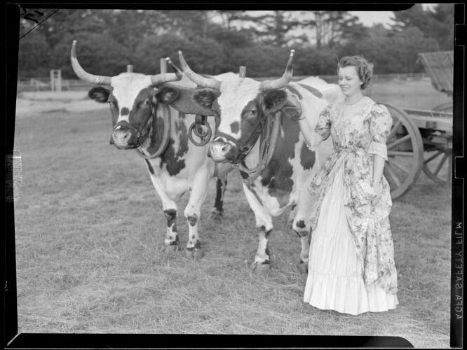 1 woman, 2 bulls