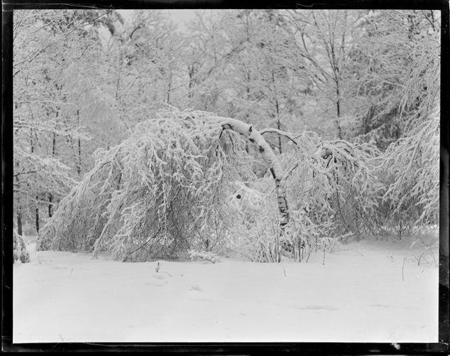 Abington, Mass. snow scene