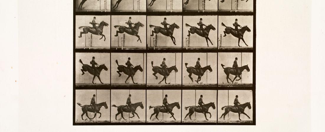 Animal locomotion. Plate 637