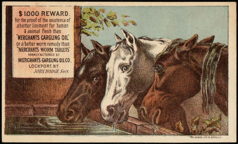 "$1000 reward for the proof of the existence of a better liniment for human & animal flesh than ""Merchant's Gargling Oil"" or a better worm remedy than ""Merchant's Worm Tablets"""