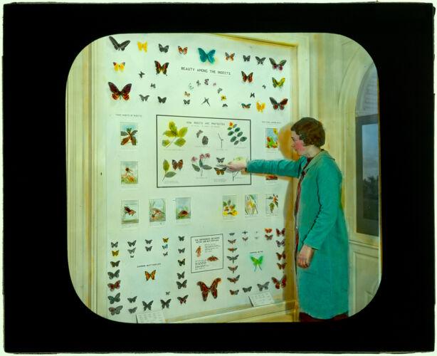 20 Butterfly Case