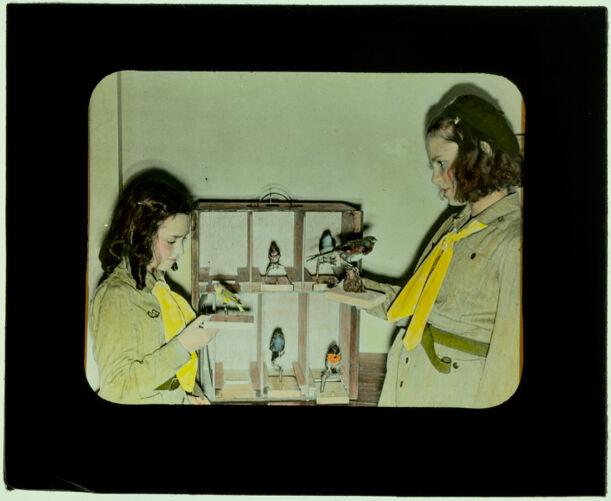 179 Girl Scouts--use of loan exhibit on birds