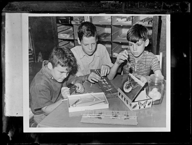 Boys mounting butterfly specimens