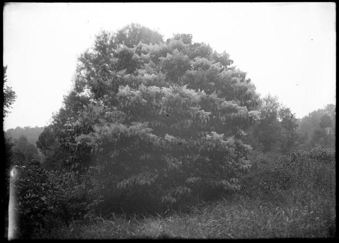Tree near brook, Forest Park #2