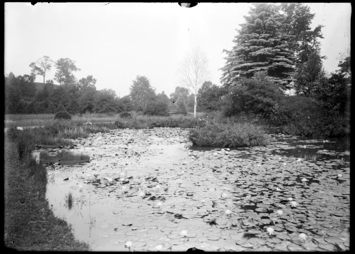 Lily pond, Forest Park #3