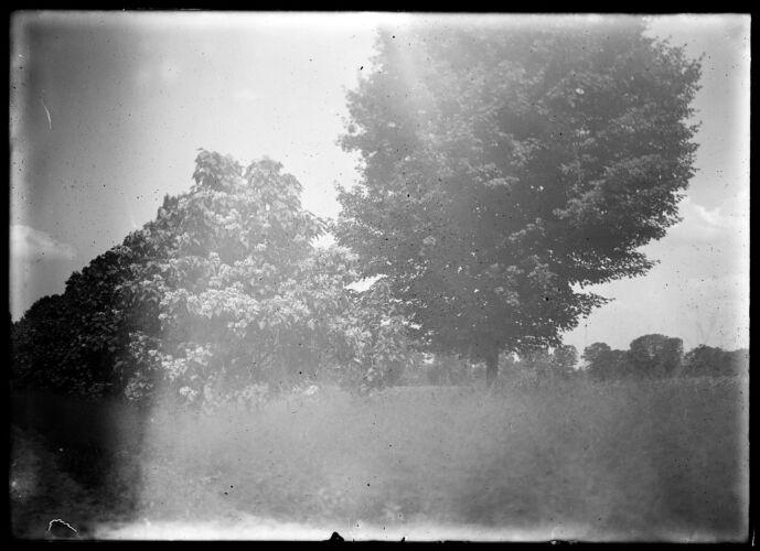Tenney's catalps trees
