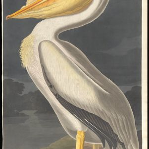The Birds of America: From Original Drawings by John James Audubon