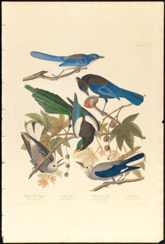 1. Yellow-billed magpie. 2. Stellers jay. 3. Ultramarine jay. 4, 5. Clark's crow