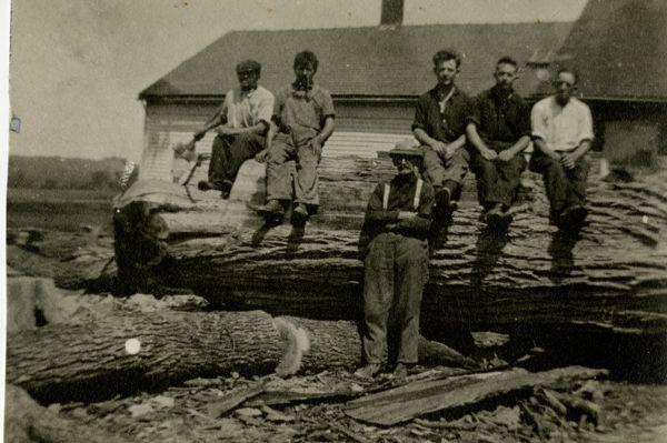 Harvesting lumber from fallen Great Elm