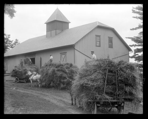 Pinecroft: loading wheat into the barn