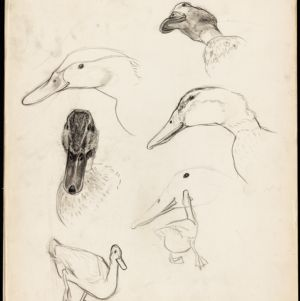 "Robert McCloskey Sketchbooks for ""Make Way for Ducklings"""