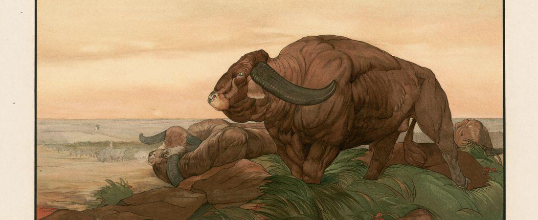 The return of the buffalo herd