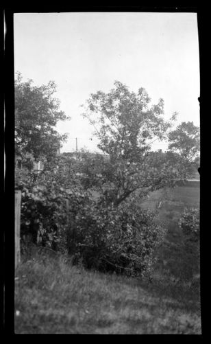 Rear yard of Jabez Fuller House, called the Tontine, Basler's Lane and Main Street