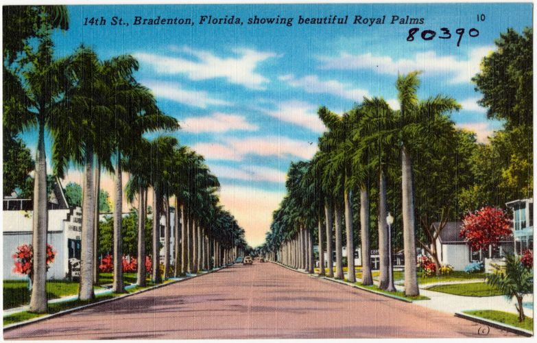 14th St., Bradenton, Florida, showing beautiful royal palms