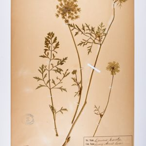 Florence Johnson Herbarium