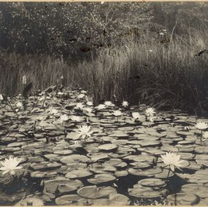 I. Chester Horton Photographic Prints
