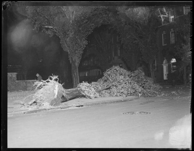 Old tree falls in Boston, Hurricane of 38