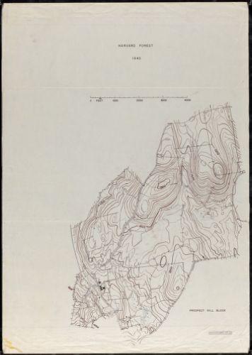Harvard Forest 1945 Prospect Hill Block
