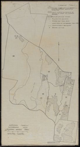Harvard Forest Meadow-Water Tract forest operations 1920