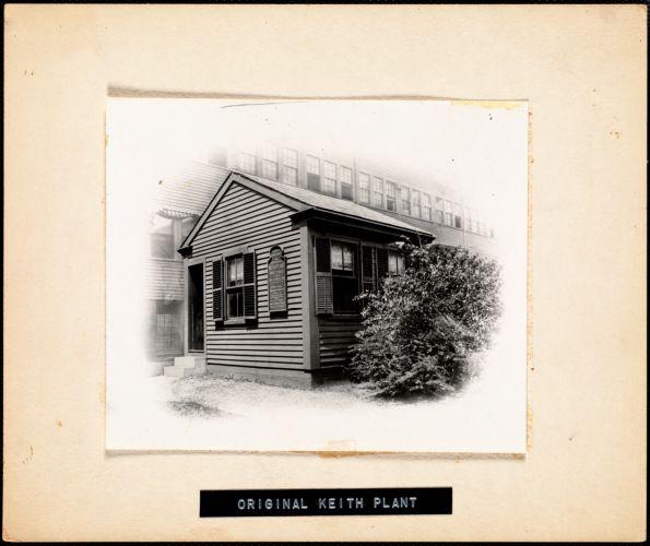 Original Keith plant
