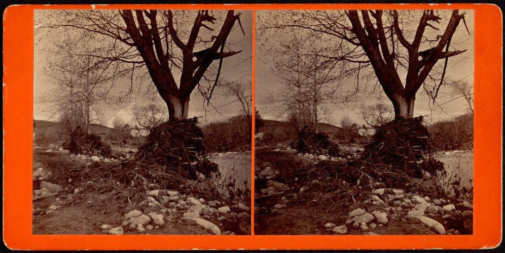 View near site of Silk Mill, debris lodged in tree--Skinnerville