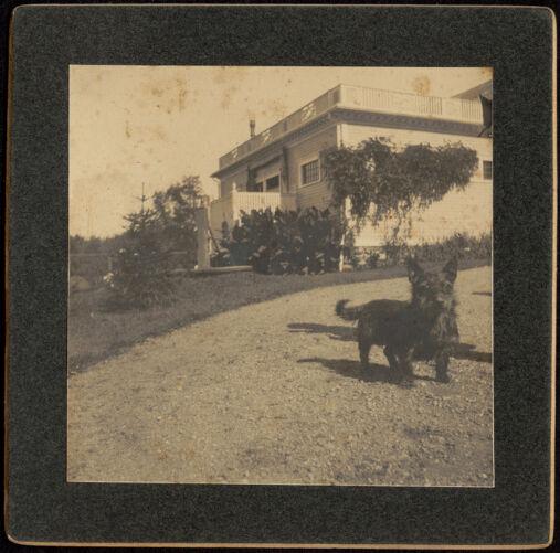 Ashdale Farm. Dog (terrier) in driveway.
